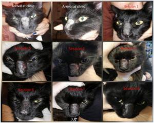 Bioptron cat